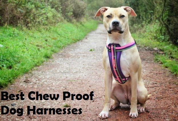 best chew proof dog harness