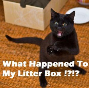 dog ate litter