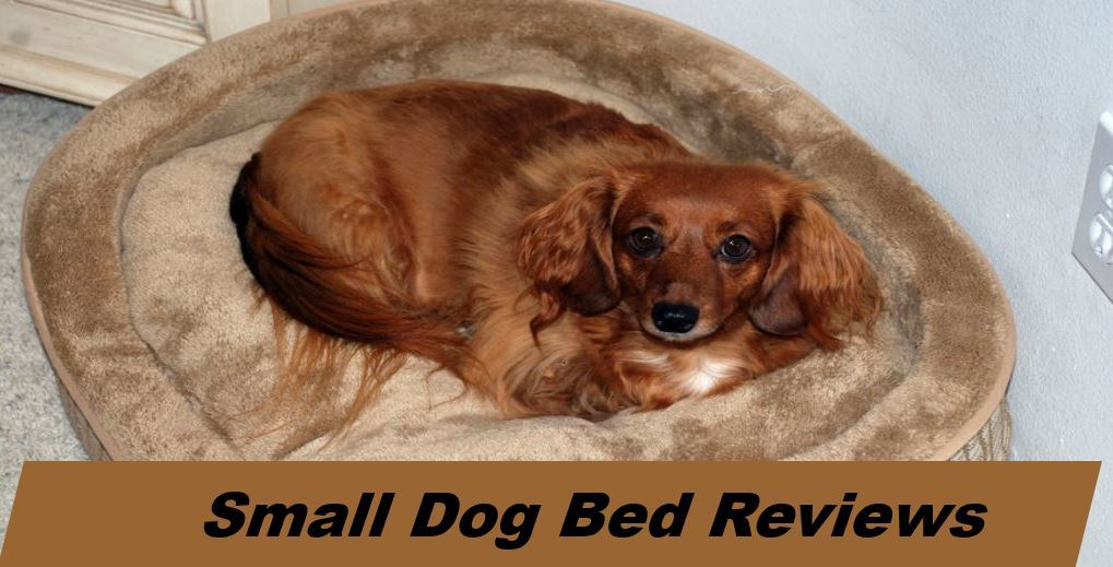 top dog beds for small canines