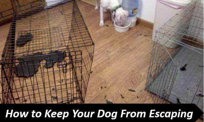 keep dog from escaping